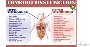 thyroid-1.jpg-1